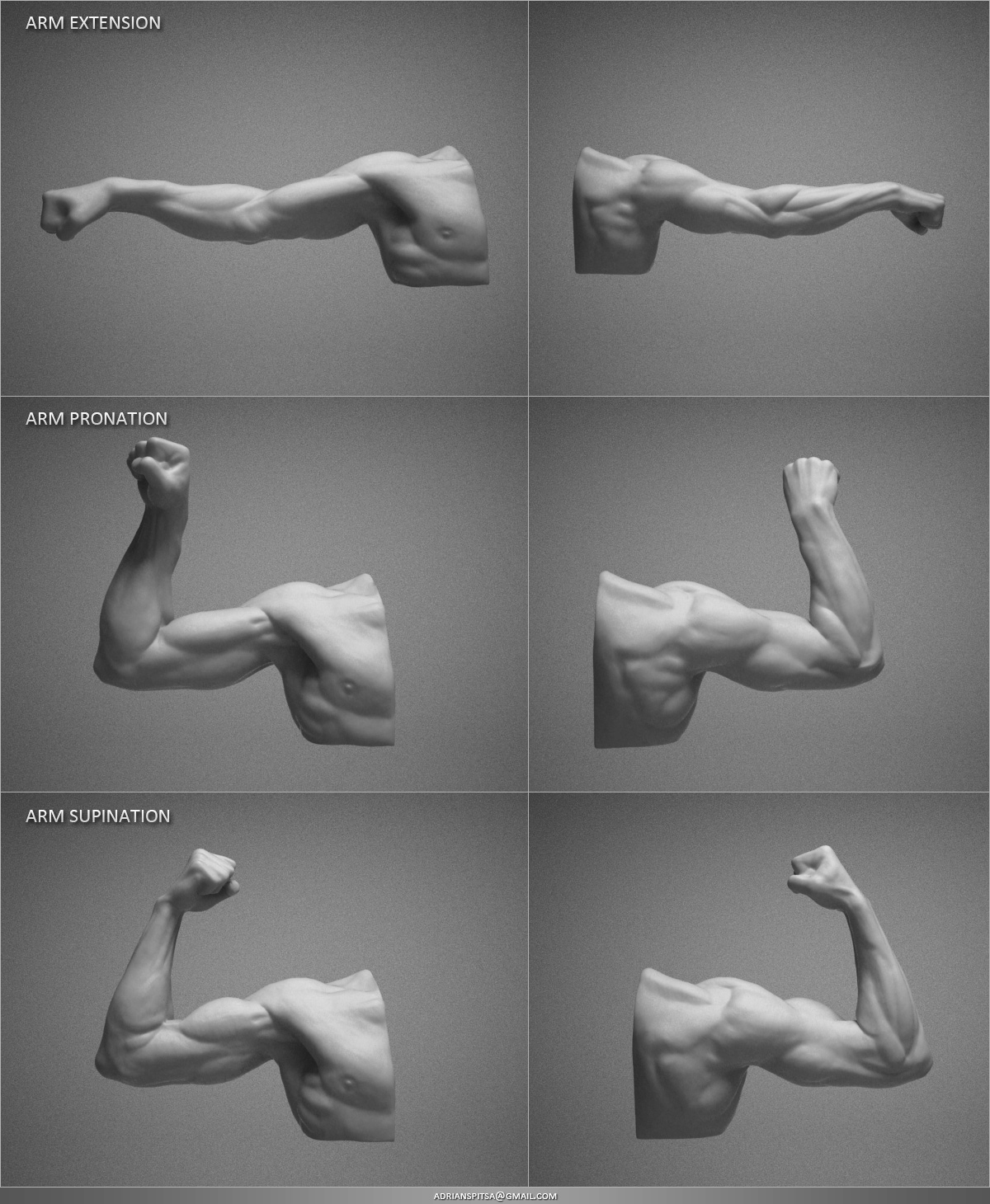 Digital Sculpting Studies 3D model - Arm Studies