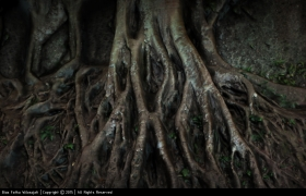 Roots 3D model - Making of 3D Scuplting by Autodesk 3Ds Max and Autodesk Mudbox.
